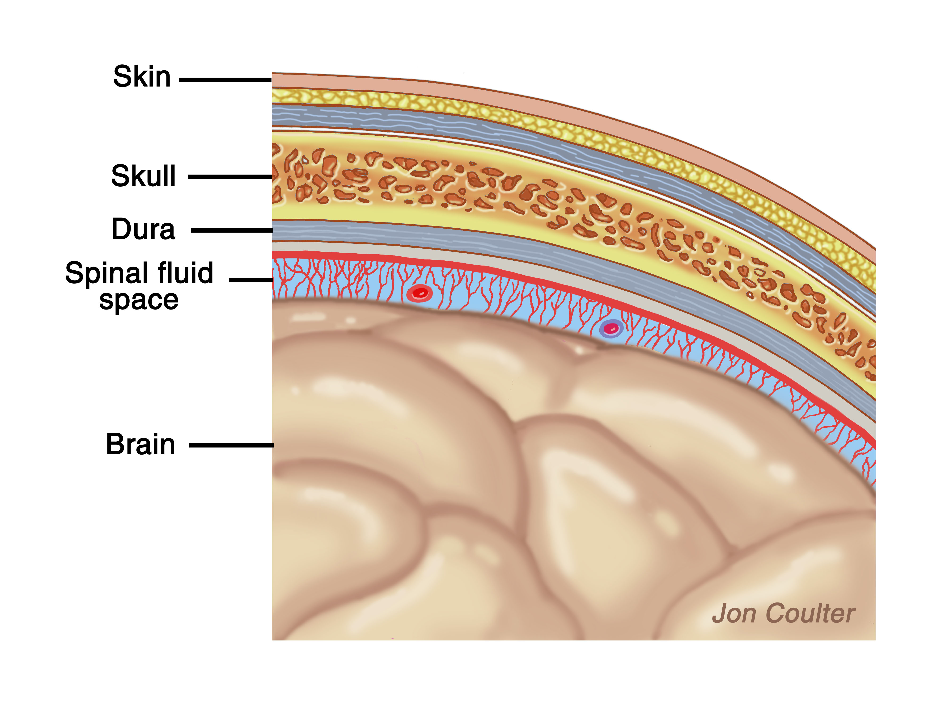 how to remember brain layers